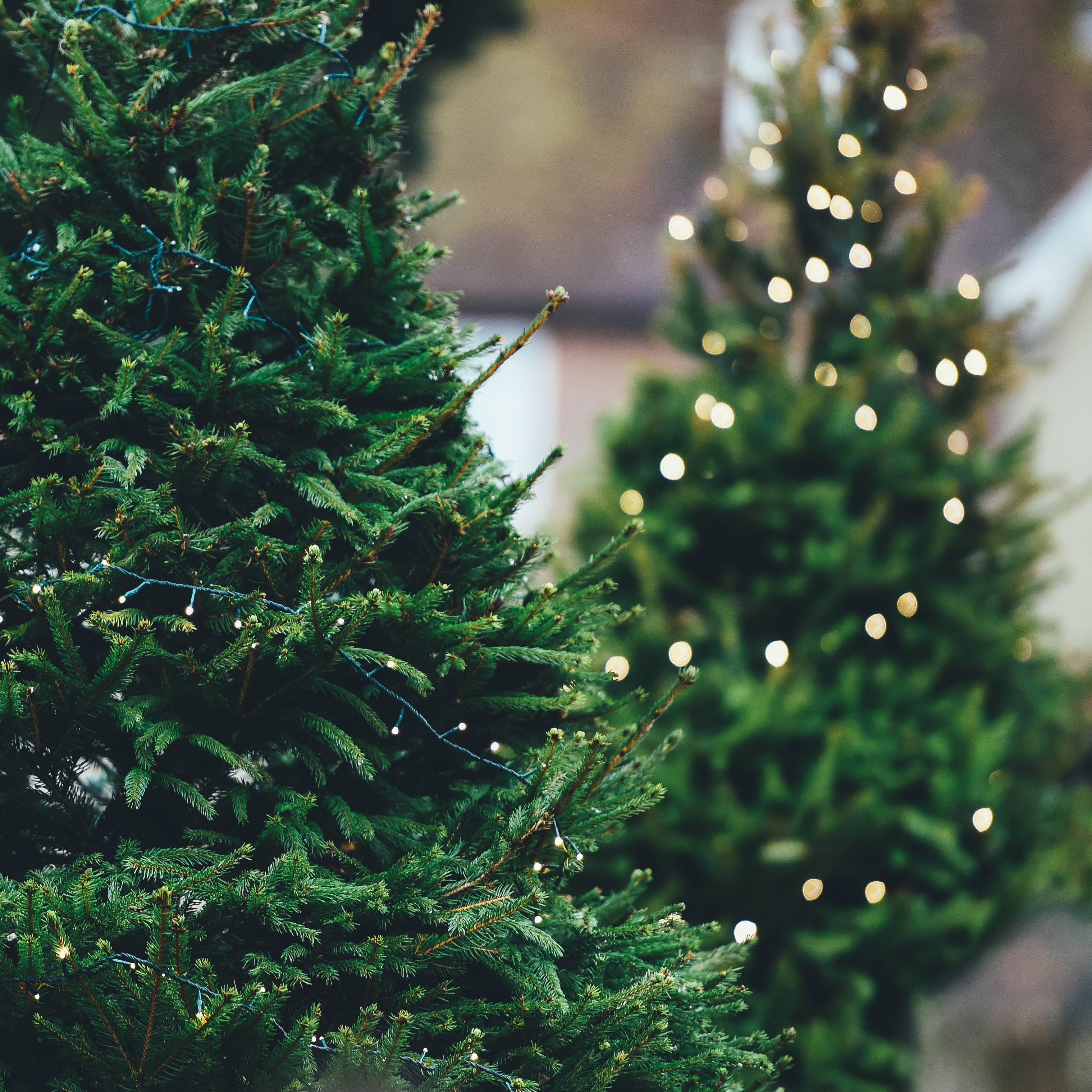 Christmas Tree Farms Winter Activities Windermere North